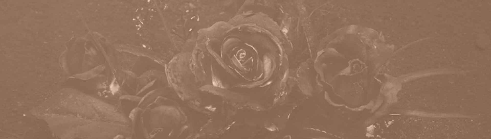 featured image of geochemical phytoremediation technology showing burning roses and ash modified after an image of arsthanea.com